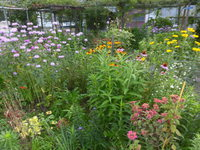 今朝の庭~