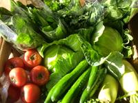 19日は三保の朝採り野菜入荷します
