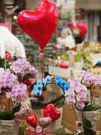 フラワーバレンタイン♪♪