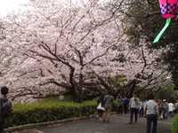 桜の開花予想とアース・エコ・フェアの開催
