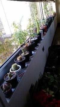 植物系美容室