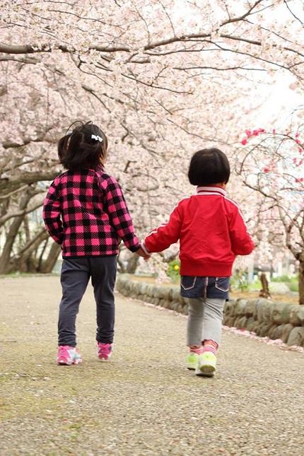 近所の桜並木を散歩