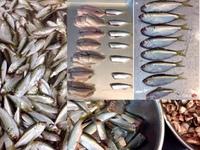コノシロ(鮗)の幼魚シンコ(新子)入荷開始