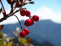 秋の南アルプス  赤石岳へのピストン山行