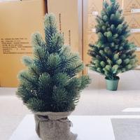 クリスマスツリー入荷してます!