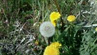 足下から春